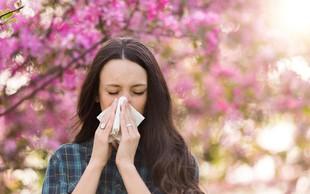Alergije: Ačiiiiih – cvetni prah