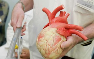Na Japonskem dovolili gojenje človeških organov v živalih