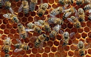 Čebele, ki domujejo v pariški cerkvi Notre-Dame, so preživele požar