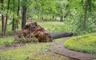 Močan veter povzročal številne nevšečnosti po državi