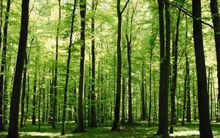 Teden godov pod geslom Sodelujemo z gozdom v dobro narave in ljudi