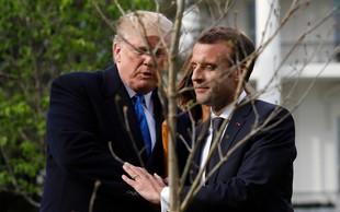 Macron bo Trumpu brez večje drame pač podaril novo drevo