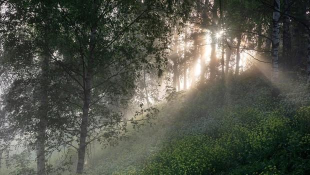 V ZDA je 73-letni moški cel teden sam taval po gozdu (foto: Profimedia)