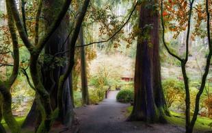 Dr. Qing Li o zdravilnosti gozdnega kopanja: 'Z gozdom do sreče in zdravja!'