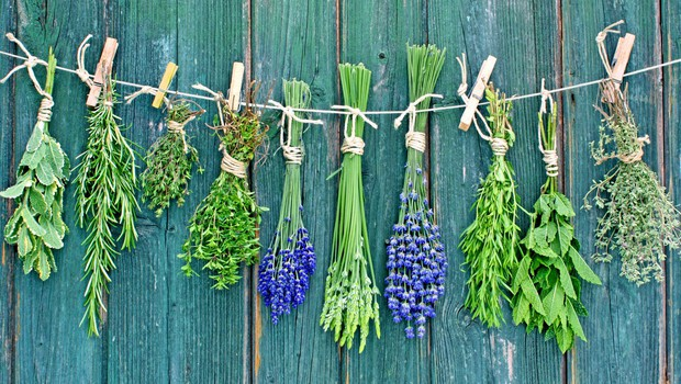 Katere rastline nam najbolj pomagajo pri poletnih ritualih? (foto: Shutterstock)