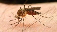 Izdelki za zaščito pred piki komarjev: Le redki zares učinkoviti!