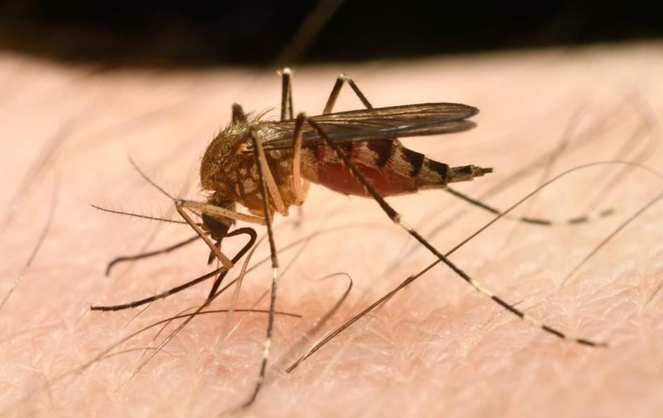 Izdelki za zaščito pred piki komarjev: Le redki zares učinkoviti! (foto: profimedia)