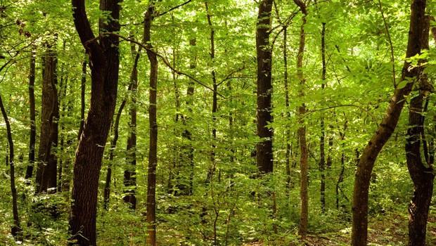 4 ekscentrični, a zato nič manj učinkoviti načini zdravljenja z drevesi (foto: profimedia)