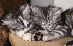 Mačke danes obeležujejo svoj dan