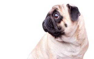 ZDA: Zaradi neurejene zakonodaje letalske družbe same urejajo pravila o živalih na krovu