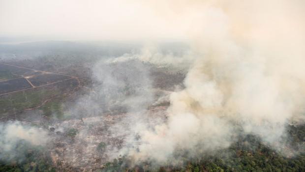 G7 z 20 milijoni evrov pomoči za spopadanje s požari v Amazoniji (foto: Profimedia)
