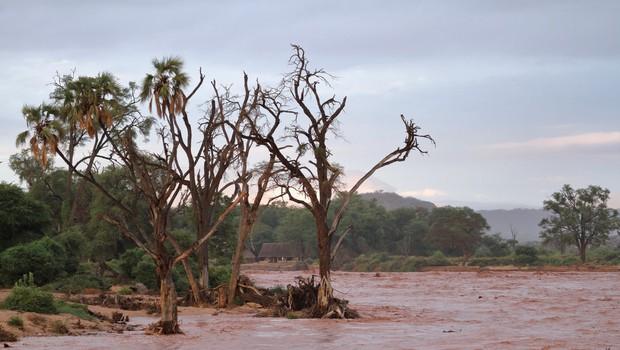 V poplavah v kenijskem nacionalnem parku tudi mrtvi, med njimi več turistov! (foto: profimedia)