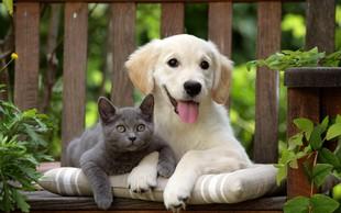 Pes ali mačka? Večna dilema!
