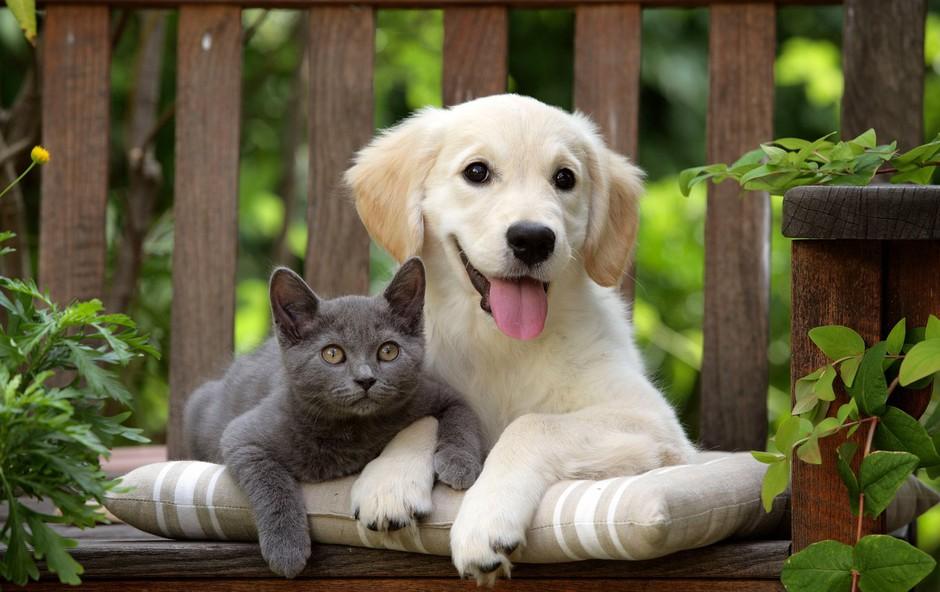 Pes ali mačka? Večna dilema! (foto: profimedia)