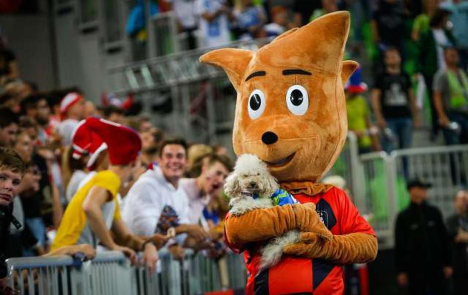 Kuža Slash potrebuje le še akreditacijo za evropsko finale v odbojki! (foto: Jure Makovec/STA)