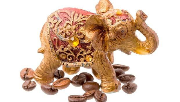 Ali ste vedeli: Najdražjo kavo na svetu pridelujejo sloni! (foto: profimedia)
