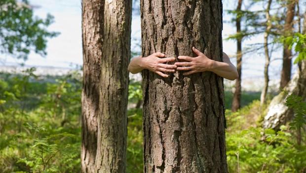 Rudi Beiser o tem, kako se srečati z božansko energijo drevesa! (foto: profimedia)