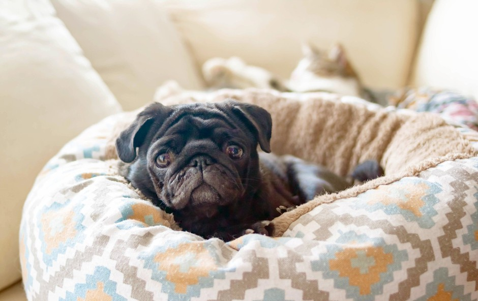 9 znakov, da vas pasji prijatelj ne mara in kako se mu lahko prikupite (foto: Profimedia)