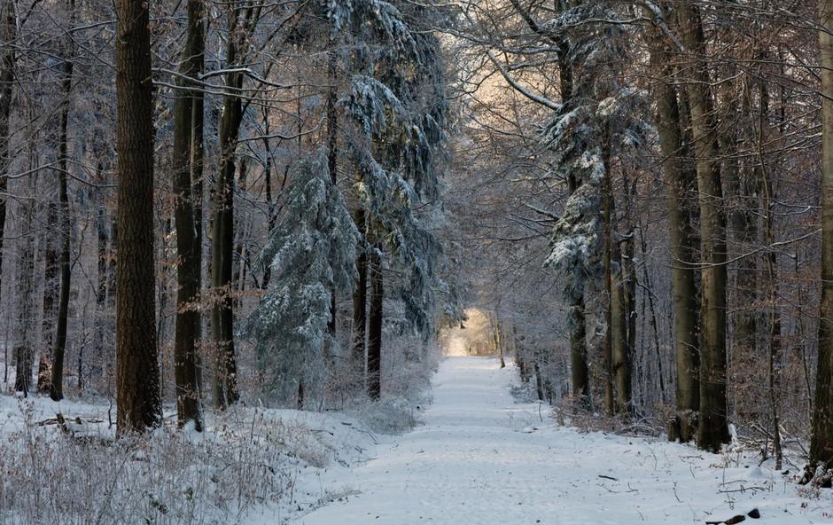Horoskopska znamenja, ki naravnost obožujejo zimo in mraz (foto: Profimedia)
