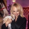 Pamela Anderson po 12 dneh končala svoj 5 zakon!
