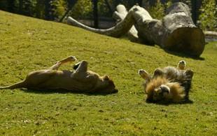Živalski vrt v Ljubljani vnovič odprl vrata za obiskovalce