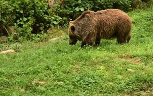 V okolici Škofljice medved napadel 56-letnega moškega