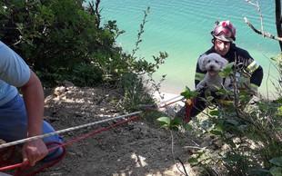 Zgodba za navdih: Gasilci rešili psa, ki je v Strunjanu zdrsnil s pečine