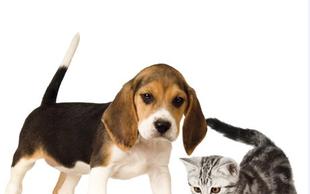 Ljubitelji živali - se spomnite, kdo je zmagal lani?