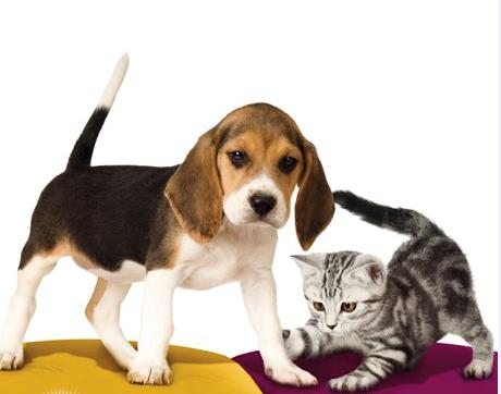 Ljubitelji živali - se spomnite, kdo je zmagal lani? (foto: Promocijsko gradivo)