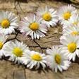 Energijska napoved: Čustvena ujma pred pomladnim solsticijem
