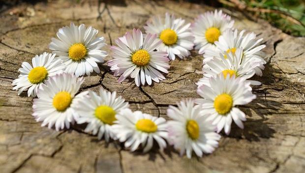 Energijska napoved: Čustvena ujma pred pomladnim solsticijem (foto: Pixabay)