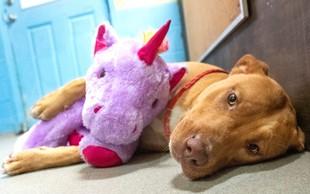 Potepuški pes, ki si je na vsak način prizadeval ukrasti vijoličnega samoroga, je dobil dom!