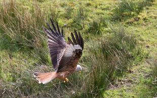 Rešil ranjeno ptico, ki je ležala ob cesti, potem pa hitro spoznal, da je naredil NAPAKO!