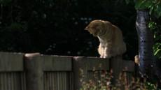 Tako (učinkovito, a še vedno prijazno) spodite sosedove mačke s svojega vrta