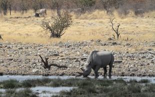 Biotska raznovrstnost (ali zakaj naj človeštvo skrbi, če izumre črni nosorog)!